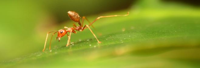 le u00e7ons de fourmis