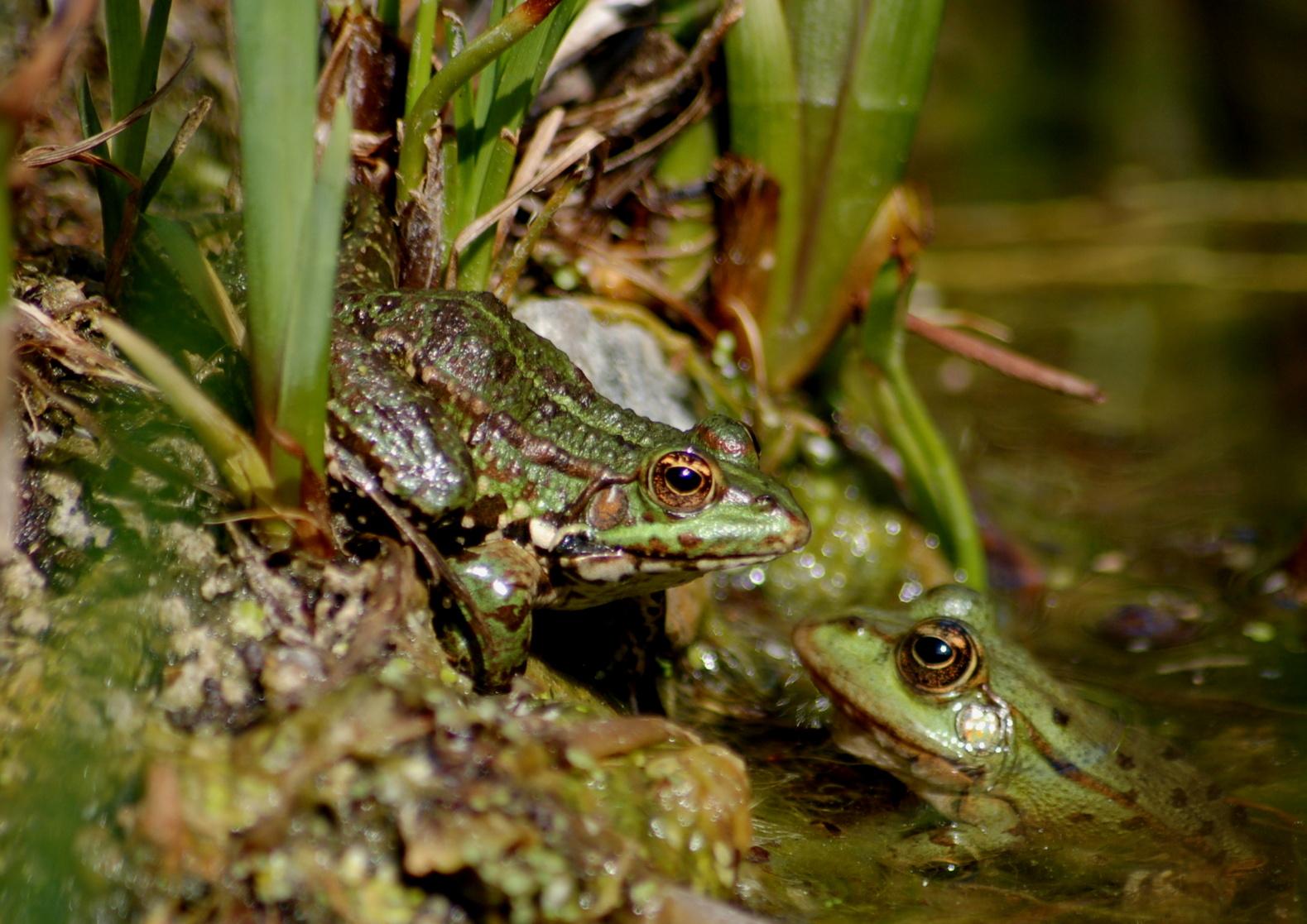 le jardin des plantes    et des grenouilles