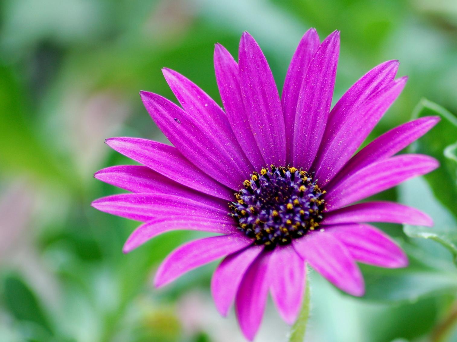 fleur_violette_largeurBlog