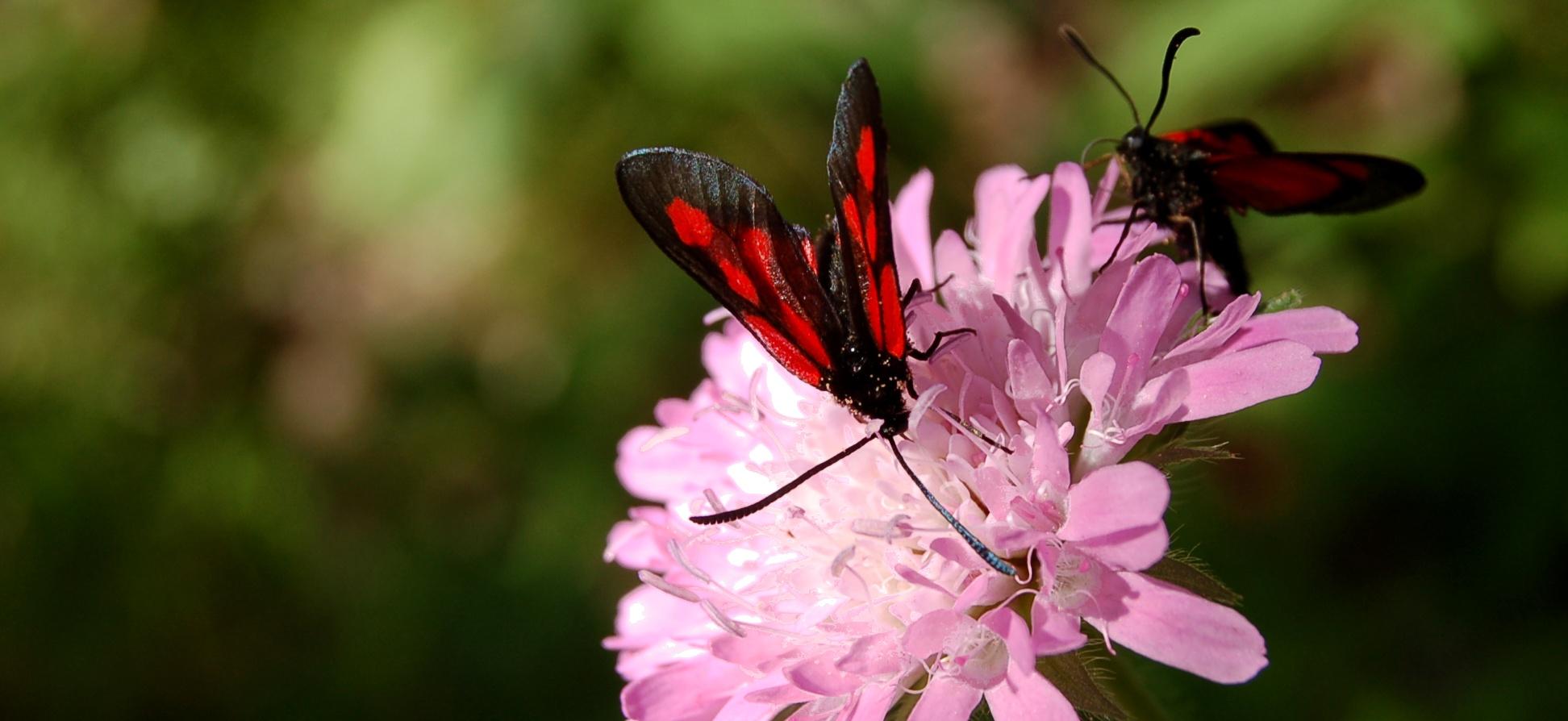 Rencontre color e - Insecte rouge et noir ...