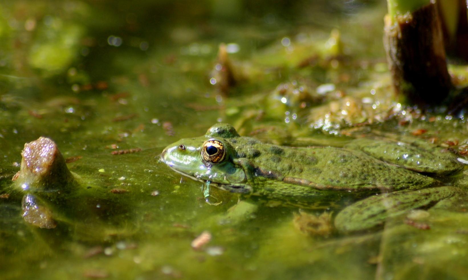 le jardin des plantes u2026 et des grenouilles